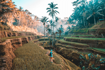 Chapter 17: Bali Rice Fields