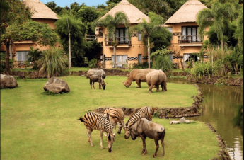 Chapter 1: Things to do in Bali: Safari and Marine Park