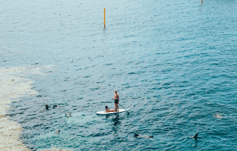 Things to do in Bali: Dolphin Watching on a Paddle Board