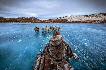 Dogsledding in Iceland