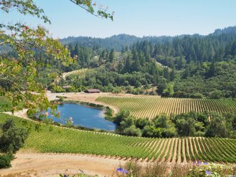 Napa Valley Wine Tour9